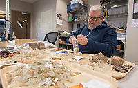 NWA Democrat-Gazette/J.T. WAMPLER Jamie Brandon, research station archaeologist with the Arkansas Archaeological Survey opens an artifact bag from the Leetown dig Monday Feb. 12, 2018 at the Survey office in Fayetteville. The Leetown archeological dig is at Pea Ridge National Military Park. Brandon will give a talk tonight at 7 P.M. ((TUESDAY FEB 13)) at the survey office at 2475 N Hatch Ave. in Fayetteville. Topics will include the Leetown dig and volunteer opportunities available this summer at the dig site in Benton County.