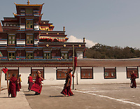 Student monks at play in a monastery, Sikkim, India
