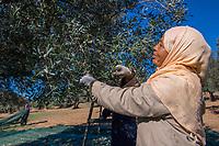 Fermes Ali Sfar Olive Oil