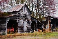 rural landscape of abandoned Virginia barn with Topaz Impression II, Edward Hopper I