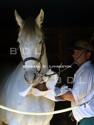 With Anticipation at Saratoga, 8/03. Saratoga Race Course, Saratoga Racetrack, beautiful horse racing, Thoroughbred racing, horse, equine, racehorse, morning mood