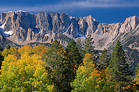 Aspen,  Jeffrey pine and Dana Plateau<br /> Lee Vining Creek Canyon<br /> Inyo National Forest<br /> Sierra Nevada,  California