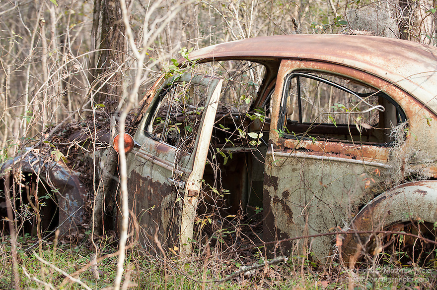 Brazoria County, Damon, Texas; a abandoned, rusty, old, dilapidated VW Beetle sitting amongst the trees in the forest