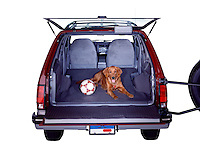 Family car with dog and soccer ball.