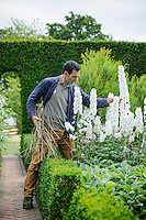 Troy Scott Smith staking White Delphiniums in the White Garden at Sissinghurst