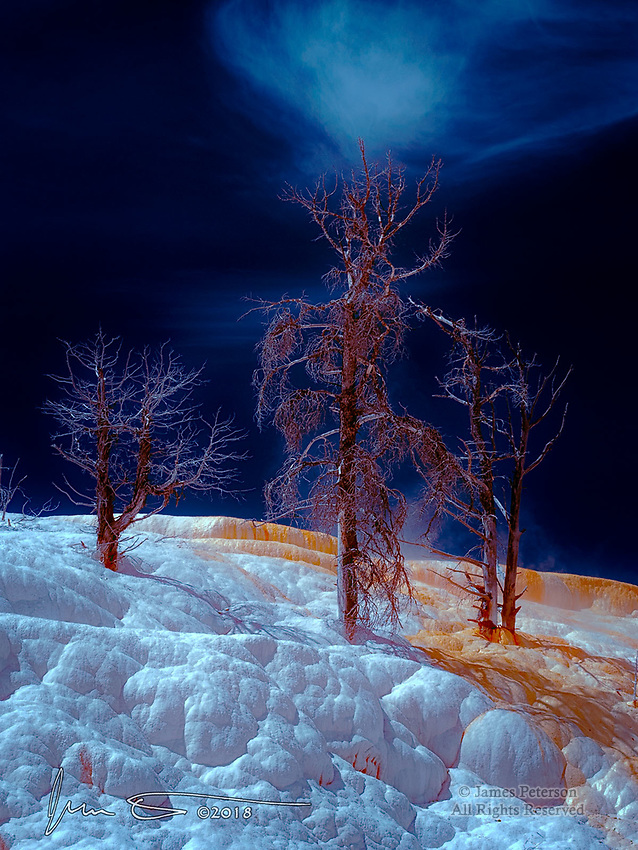 Arboreal Quartet at Mammoth Hot Springs (Infrared) ©2018 James D Peterson.  These four ghostly trees were killed years ago by the advancing and toxic waters and mineral deposits of this volcanic hot spot in Yellowstone National Park.  But somehow, they still seem quite lively and animated, and perhaps more majestic than ever.