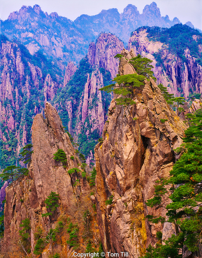 Huangshan Mountains in Afternoon Light, Yellow Mountains, Huangshan Mountains National Park, People's Republic of China