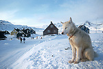 Greenland winter