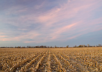 Corn Stubble is all that remains from the preceeding year's crop on an Indiana farm in Benton County