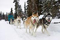 Wayne Curtis Siberian Huskies run on Finger Lake just prior to the Finger Lake checkpoint durng Iditarod 2008