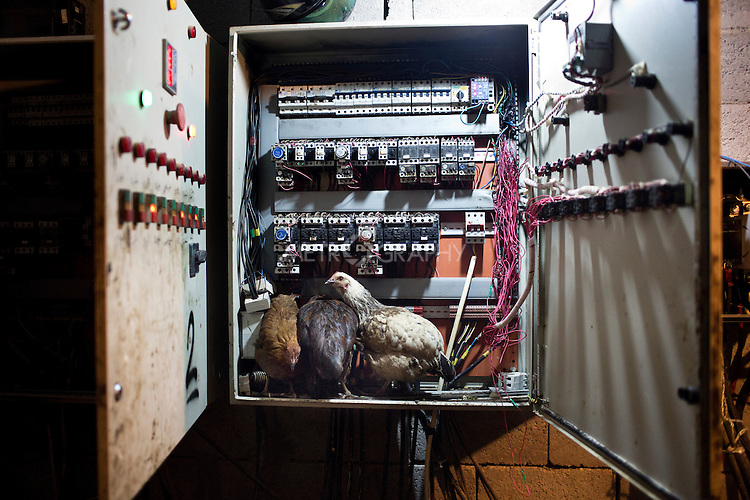 18/02/15 --TANJERO, IRAQ: Chickens roost inside a fuse box at an oil refinery.<br /> <br /> A family of displaced Yezidis lives next to an oil refinery in the Kurdish Region of Iraq. The men run the refinery 24 hours a day with little to no safety equipment. Reporting for this article was supported by a grant from the Pulitzer Center on Crisis Reporting