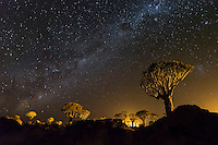 Night scene in the Quiver Tree Forest.