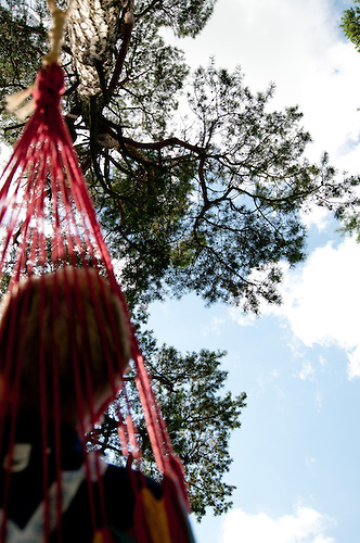 View from the hammock. Photo: Malin Serner/SCOUTERNA