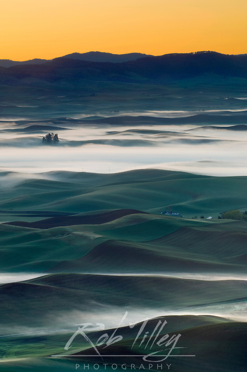Foggy Palouse Farm Fields From Steptoe Butte SP at Dawn, Whitman Co., WA, USA