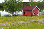 Wild Flower Meadow and Wooden Sauna building by lake, Lentiira, Kuhmo, Finland,