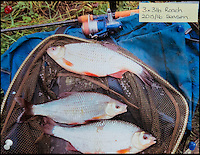 BNPS.co.uk (01202 558833)<br /> Pic: TomWren/BNPS<br /> <br /> Three 3lb Roach.<br /> <br /> A mystery fishing &quot;genius&quot; has sparked intrigue after pinning photos of his monster catches inside an angling club's riverbank lodge - in an enigma being dubbed 'Good Will Fishing'.<br /> <br /> The anonymous fisherman has systematically worked his way through a tough stretch of the River Avon and pulled in 19 once-in-a-lifetime catches in the last 12 months.<br /> <br /> And much like 1997 film Good Will Hunting, in which Matt Damon's genius character anonymously solves near-impossible mathematical equations while working as a janitor at a prestigious university, the angling Einstein showcases his brilliance in secret.