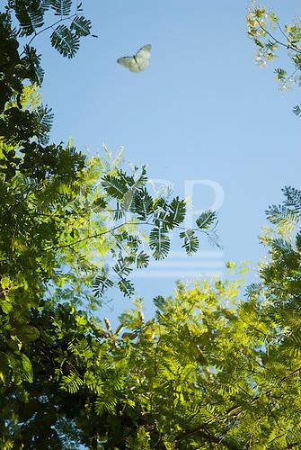 Fazenda Bauplatz, Brazil. White butterfly and trees against the blue sky.