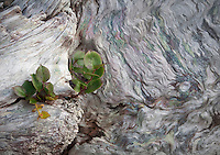 Patterned driftwood with small plant growing in it's cracks.