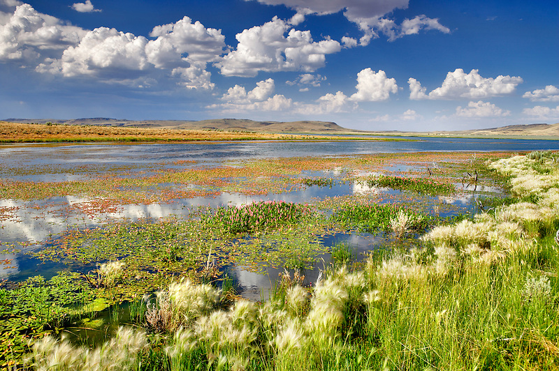 Summit Lake with red water flowers. Nevada