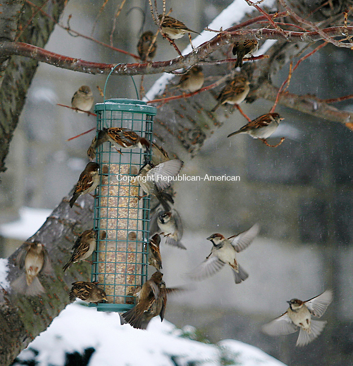 WATERBURY, CT. 23 JANUARY 29_NEW_012809DA06.jpg-Birds dine off a feeder in Waterbury during Wednesday storm.<br />  Darlene Douty