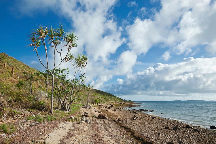 Pandanus palm at Sadies Beach.  Thursday Island, Torres Strait Islands, Queensland, Australia