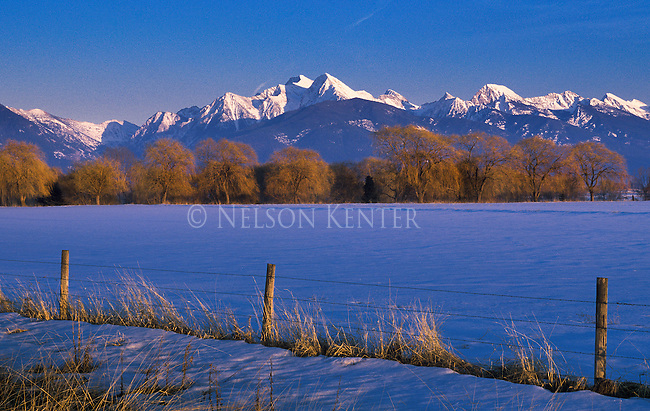 The sun setting on the Mission Mountains lights up the willow trees and fence line on a beautiful winter day in Montana