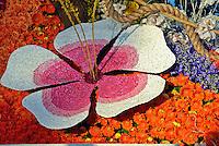 White Pink Red Rose petal floral lily design close up Orange Daisey purple violet orchids orange roses