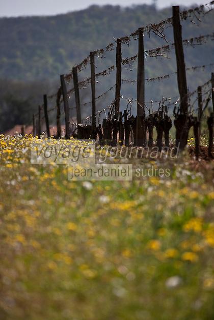 Europe/Europe/France/Midi-Pyrénées/46/Lot/ Env de Puy-l'Evèque:  Le vignoble du Vin de Cahors AOC