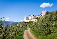 Italy, South Tyrol (Trentino - Alto Adige), Val Venosta, Schluderns (Italian: Sluderno): apple blossom and Castle Schluderns (Castel Coira)   Italien, Suedtirol (Trentino - Alto Adige), Vischgau, Schluderns: die Churburg und Apfelbluete