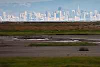 The Hayward Marsh provides habitat for birds and recreation for people in the midst of the San Francisco Bay area.  On a clear day the San Francisco skyline is visible across the bay.