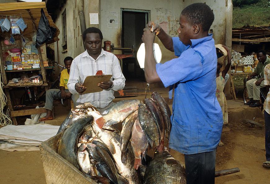 Weighing of captured fish