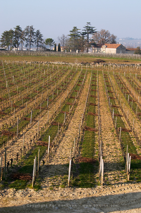 Vineyard. Chateau Balestard la Tonnelle, Saint Emilion, Bordeaux, France