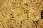 Circular bales of farmyard straw stacked in warm sunshine
