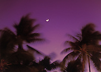 Palm trees against a purple sky with crescent moon and brilliant star right at dusk.