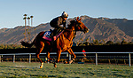 October 30, 2019: Breeders' Cup Juvenile Fillies Turf entrant Daahyeh, trained by Roger Varian, exercises in preparation for the Breeders' Cup World Championships at Santa Anita Park in Arcadia, California on October 30, 2019. Scott Serio/Eclipse Sportswire/Breeders' Cup/CSM