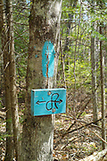 Cross Rivendell Trail near Mount Cube in Orford, New Hampshire USA