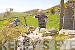 BIRDS ATTACK: Retired farmer and chairman of Kerry Lamb Co-op, Lispole and member of ICMSA showing the damage done by ravens and grey crows attacking lambs at Ballybowler, Dingle on Saturday.