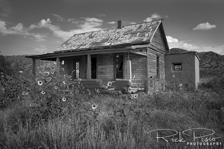 Sunflowers surround an abandoned shack in Cuervo, New Mexico