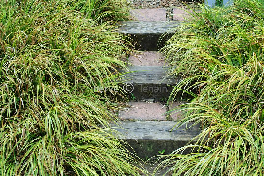 Jardins du pays d'Auge (mention obligatoire dans la légende ou le crédit photo):.devant le poulailler, espace clos de barrières bleues et escalier bordée d' Acorus gramineus 'Ogon'.
