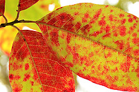 Close up of fall leaves with warm red and orange colors - Free Stock Photo.