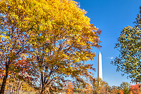 Washington Monument Autumn in Washington DC