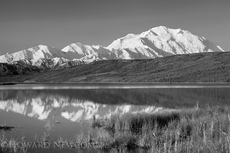 Mount McKinley on a clear and calm summer morning with the grassy shore of Wonder Lake framing the mirror reflection.