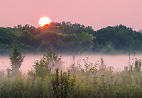 Sunrise light turns both sky and mist pink as the sun rises above the treee ridge at Springbrook Prairie Forest Preserve, DuPage County, Illinois