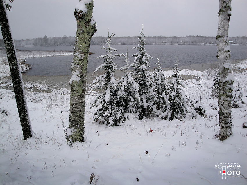 An early winter storm dumps six inches of snow on the Chequamegon National Forest in northern Wisconsin.