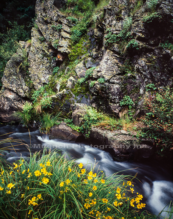 East Fork of the Black River,White Mountains,Arizona