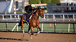 October 30, 2019: Breeders' Cup Distaff entrant Dunbar Road, trained by Chad C. Brown, exercises in preparation for the Breeders' Cup World Championships at Santa Anita Park in Arcadia, California on October 30, 2019. Carolyn Simancik/Eclipse Sportswire/Breeders' Cup/CSM