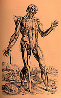 "Science:  Vesalius--The fifth ""Muscle Man"".  FABRICA 1555 edition.  Photo '84."