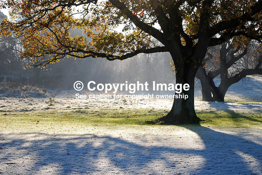 Frost, autumn, winter, leaves, tree, sunshine, playing field, Queen's University, Belfast, N Ireland, 200811301599..Copyright Image from Victor Patterson, 54 Dorchester Park, Belfast, N Ireland, BT9 6RJ...Tel: +44 28 9066 1296.Mob: +44 7802 353836.Fax: +7092 356429.Email: victorpatterson@mac.com..IMPORTANT: The copyright of my photographs is not for sale. Only a licence to publish, subject to the terms and conditions below, is on offer.