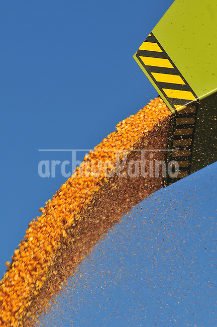 Corn ready for harvest in a farm near Ines Indart in Buenos Aires province, Argentina-