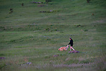 Man walking dog in Foothills in summer, Boulder, Colorado